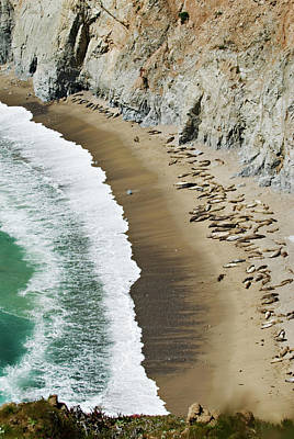 Photograph - California Sea Lions by Renee Hong