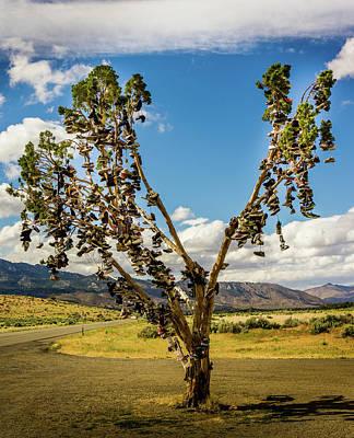 Photograph - California Shoe Tree by TL Mair