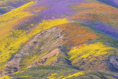 Photograph - California Spring Color by Marc Crumpler