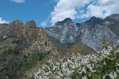 Photograph - California Spring In The Mountains by Cascade Colors