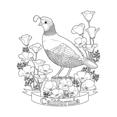 California State Bird And Flower Coloring Page Art Print
