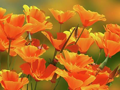 Photograph - California Sunshine by Gill Billington