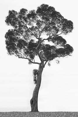 Twist Digital Art - California Tree by Mike McGlothlen