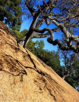 Photograph - California Tree Two by Elizabeth Hoskinson