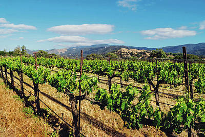 Photograph - California Vineyard by April Reppucci