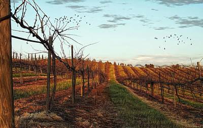 Grape Vines Photograph - California Vineyard In Winter by Glenn McCarthy Art and Photography