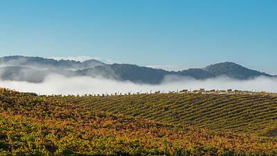 Vine Grapes Photograph - California Vineyard by Joseph Smith