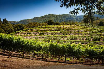 California Vineyard Art Print by Robert Davis