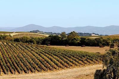 Photograph - California Vineyards by Charlene Reinauer