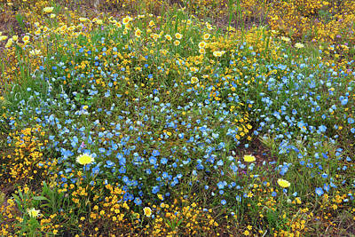 Photograph - California Wildflower Patch by Ram Vasudev