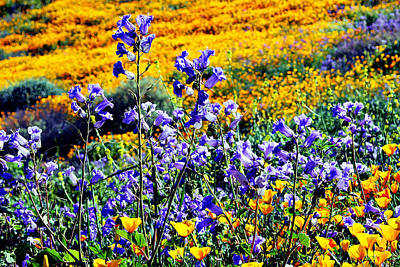 Photograph - California Wildflowers by Glenn McCarthy