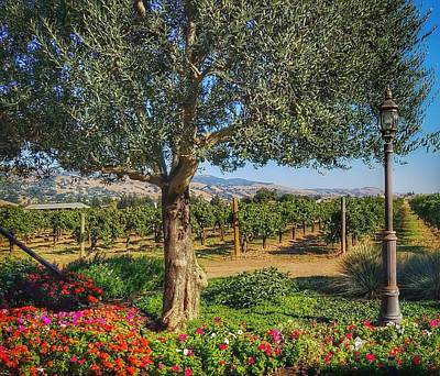Photograph - California Wine Country by Mary Capriole