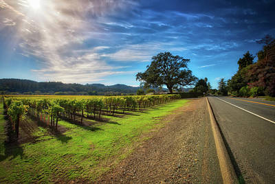 Old Country Roads Photograph - California Wine County Road- Sonoma Vineyard And Lone Oak Tree by Jennifer Rondinelli Reilly - Fine Art Photography