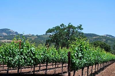 Photograph - California Winery Grape Vine View by Matt Harang