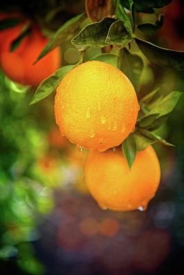 California's Sweet Citrus Print by Lynn Bauer