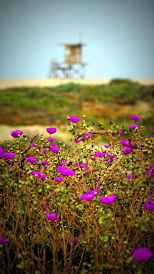 Photograph - California's Wild Flower View by Laurie Pike