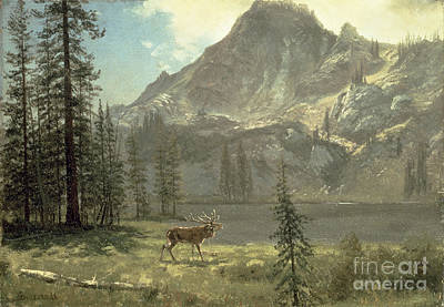 Reindeer Painting - Call Of The Wild by Albert Bierstadt