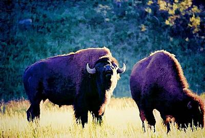 Yellowstone Digital Art - Call Of The Wild II by Jan Amiss Photography