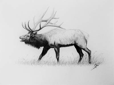 Monotone Drawing - Call Of The Wild by Olivia Thompson