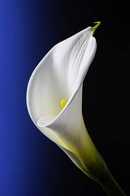 Flower Design Photograph - Calla Blue Black by Garry Gay