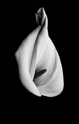 Calla Challenge In Black And White Art Print