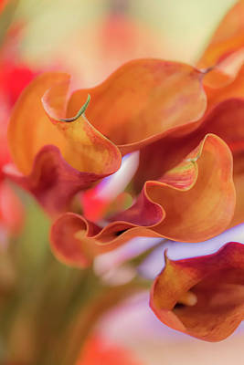Photograph - Calla Lilies by Francisco Gomez