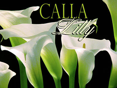 Photograph - Calla Lilly by Craig Perry-Ollila