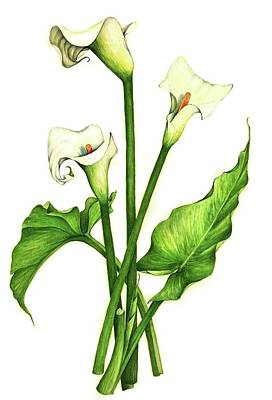 Art Print featuring the painting Calla Lilly by Heidi Kriel