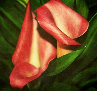 Calla Lillys Art Print by Cathie Tyler