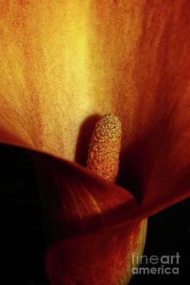 Photograph - Calla Lily by Ana Mireles