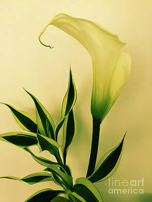 Photograph - Calla Lily by Camille Pascoe