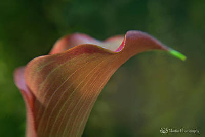 Calla Lily Close-up Art Print