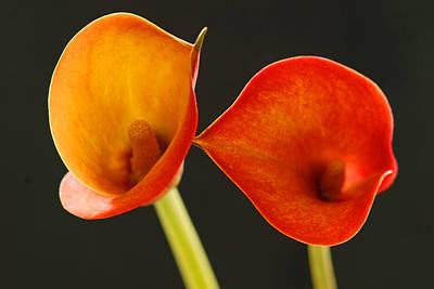 Calla Lily Art Print by Dennis Hammer