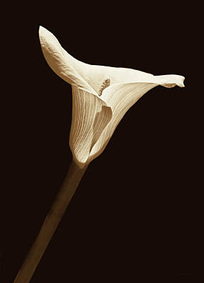 Photograph - Calla Lily Flower Sepia by Jennie Marie Schell