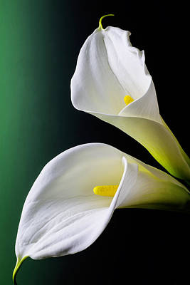 White Flower Photograph - Calla Lily Green Black by Garry Gay