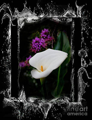Photograph - Calla Lily Splash by Al Bourassa