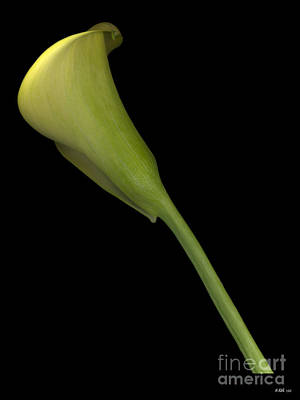 Photograph - Calla Lily Stem by Heather Kirk