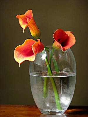 Photograph - Calla Lily Stems by Diana Angstadt