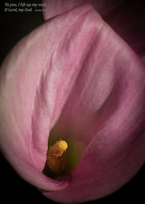 Photograph - Calla Lily With Psalm by Kathleen Scanlan