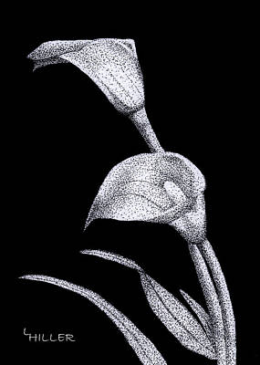Stippling Drawing - Calla by Linda Hiller