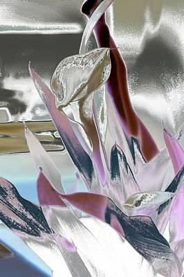 Calla Art Print by Robert Meanor