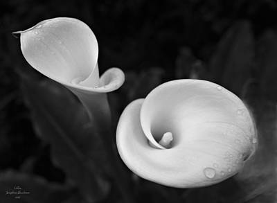 Photograph - Callas   4653 by Josephine Buschman