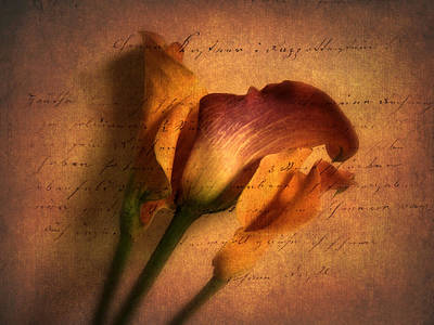 Poem Photograph - Callas By Candlelight by Jessica Jenney