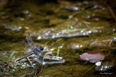 Photograph - Callaway Gardens Dragonfly Art by Reid Callaway