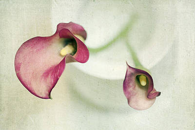 Callies Art Print