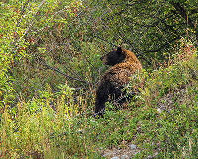 Photograph - Calling For Her Cubs by Yeates Photography