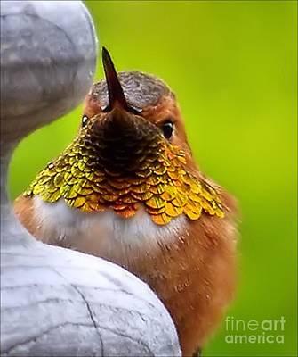 Photograph - Calliope Hummingbird by Julia Hassett
