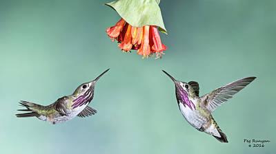Photograph - Calliope Hummingbirds by Peg Runyan