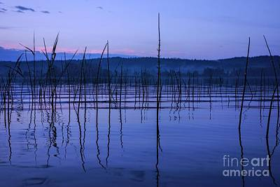 Calm Evening By A Moist Lake In Finland Art Print by Mikko Palonkorpi