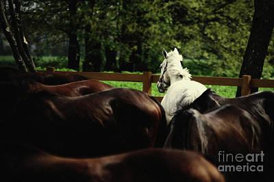 Photograph - Calm Horses by Dimitar Hristov